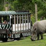 Mempelajari Hewan Langka di Bali Safari and Marine Park