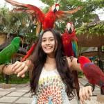 Bali Bird Park – Surga Berbagai Burung Nan Eksotis