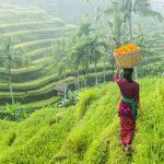 Jalan Jalan ke Ubud dengan Sewa Mobil di Bali