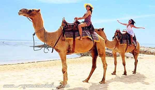 bali camel safari nusa dua bali